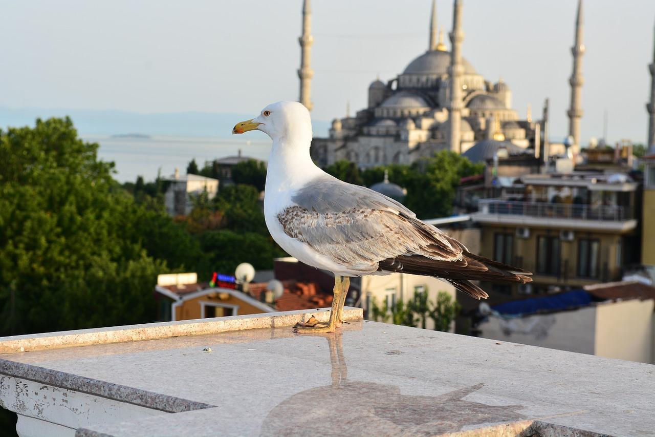 Γλάρος Κωνσταντινούπολη
